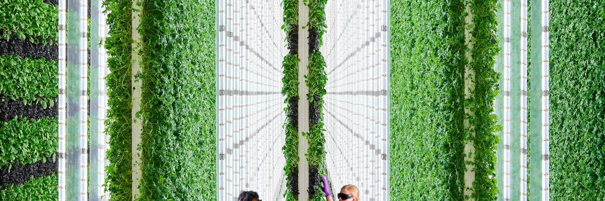 As Central Valley Farmlands Suffer Fire and Drought, a New Vertical Farm Is Sprouting — in Compton
